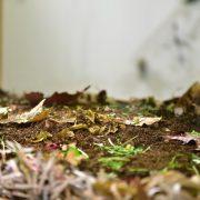 Kompost II: Solucan Besleyerek Artı Değeri Çöpten Üretmek