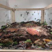 Bir Toprak Söyleşi ve Çocuklar için Kolay Kompost Atölyesi